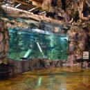 Bass Pro aquarium fish tank